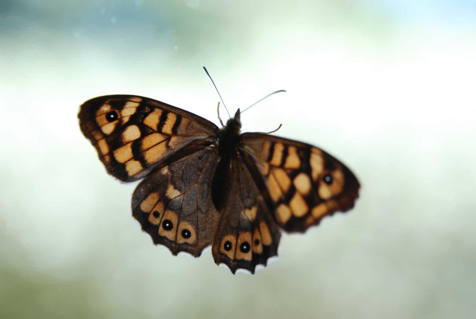 Mariposa en la ventana