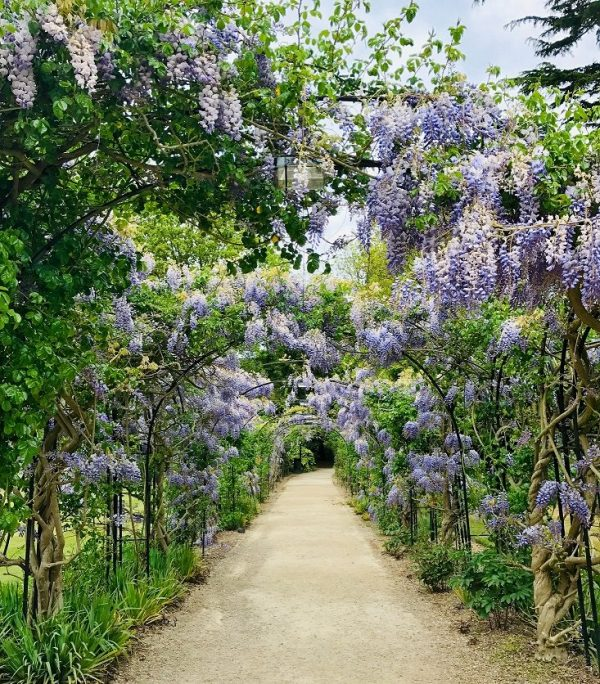 Jardín con flores lila