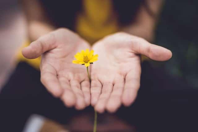 Manos sosteniendo flor amarilla