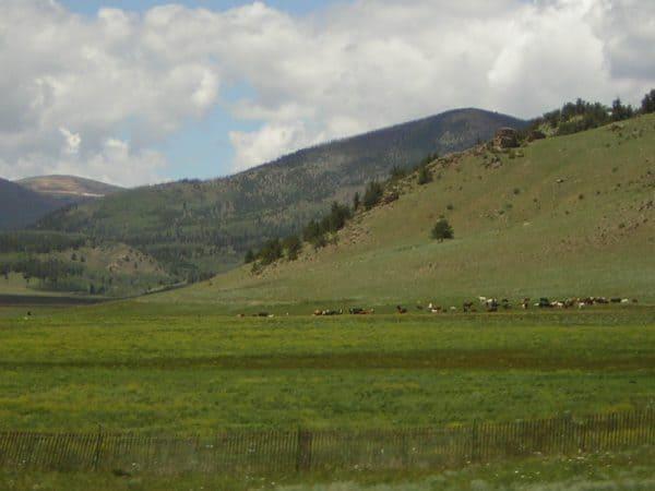 Prado verde con montaña y cielo al fondo
